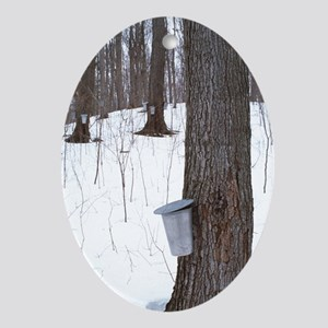 Collecting maple tree sap - Oval Ornament