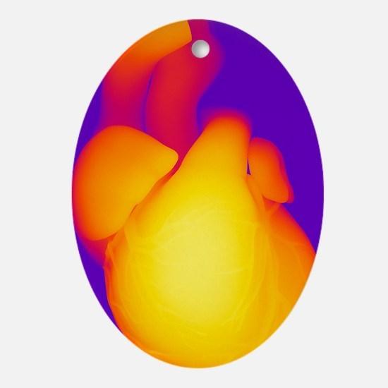 Heart, computer artwork - Oval Ornament