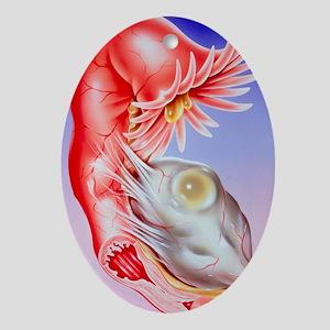 ertility - Oval Ornament