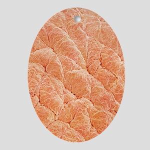 Human skin, SEM - Oval Ornament