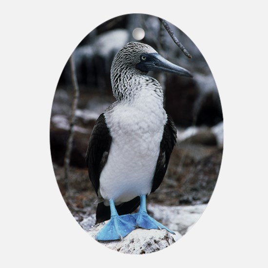 Blue-footed booby - Oval Ornament