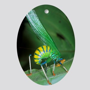 Bush cricket threat display - Oval Ornament
