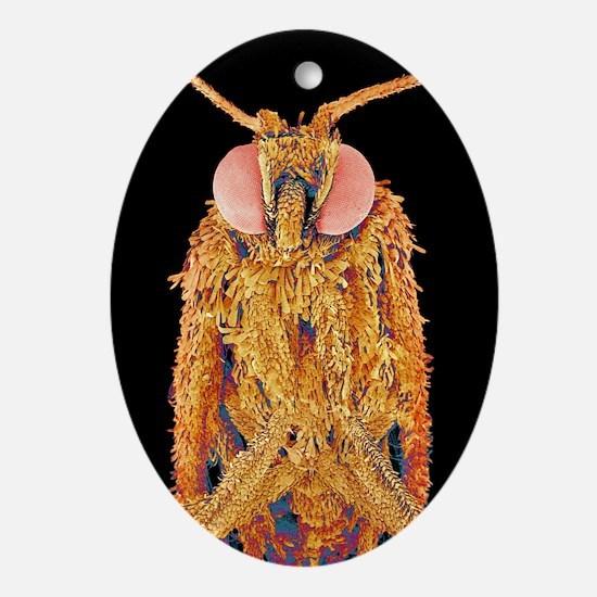 Geometer moth, SEM - Oval Ornament