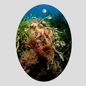 Leafy sea dragon - Oval Ornament