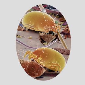 Dust mites, SEM - Oval Ornament