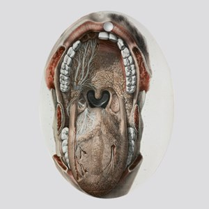 ork - Oval Ornament