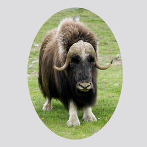 Muskox - Oval Ornament