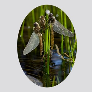 Newly-emerged dragonflies - Oval Ornament