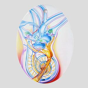 Inner ear - Oval Ornament