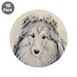 Shetland Sheepdog 3.5