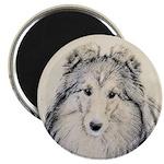 Shetland Sheepdog 2.25