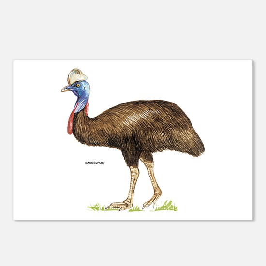 Cassowary Bird Postcards (Package of 8)