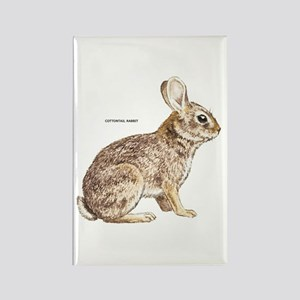 Cottontail Rabbit Rectangle Magnet