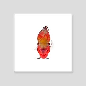 Flowerhorn Cichlid Sticker
