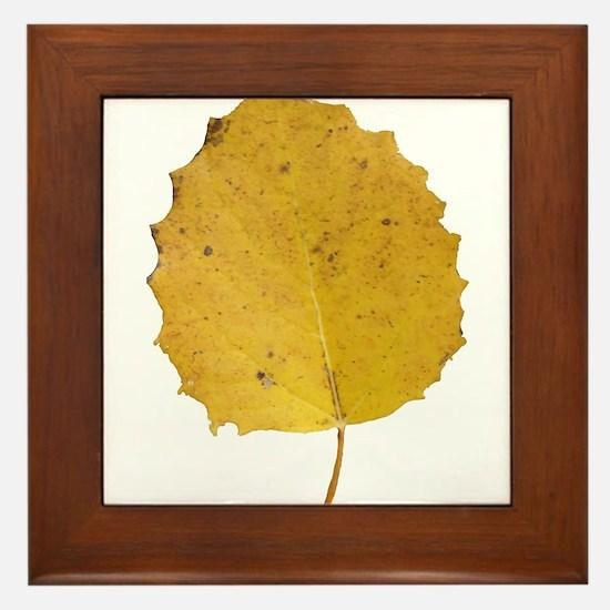 Golden Aspen Leaf Framed Tile