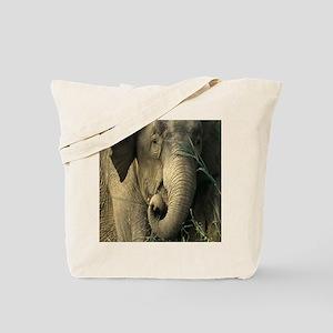 Asain Elephant Tote Bag