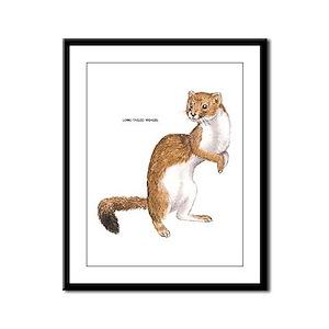 Long-Tailed Weasel Framed Panel Print