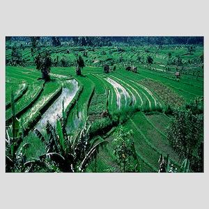 High angle view of rice farming, Bali, Indonesia