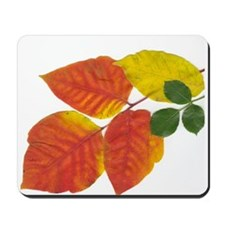 Autumn Leaves in Boston by Khoncepts Mousepad