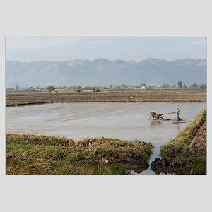 Man tilling rice field, Inle Lake, Shan State, Mya