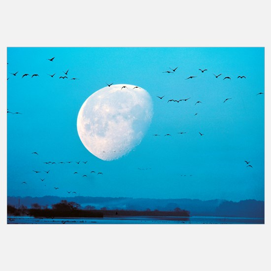 Migrating Birds in Blue Sky with Half Moon