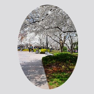 D.C. Cherry Blossoms Ornament (Oval)