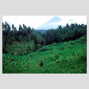 Rice farming, Bali, Indonesia
