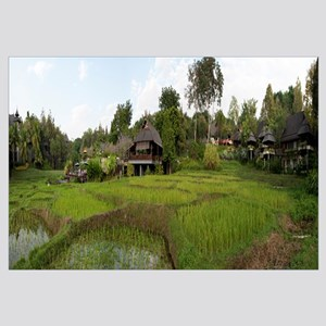 Rice fields, Four Seasons Resort, Chiang Mai, Chia