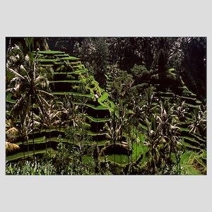 Rice paddies in a field, Ubud, Bali, Indonesia