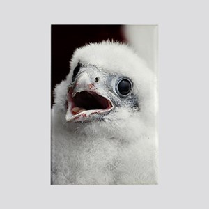 Young peregrine falcon Rectangle Magnet