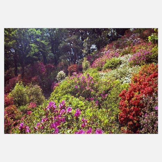 Trees and plants in a garden, Rikugien Garden, Tok
