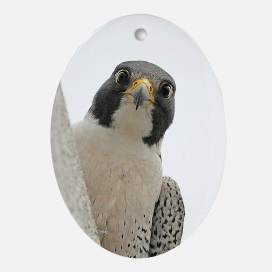 George Watchful - Oval Ornament