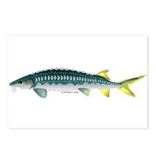 White Sturgeon fish Postcards (Package of 8)