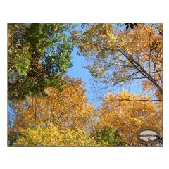 Chesapeake Arboretum 11 05 calendar 16x20 print