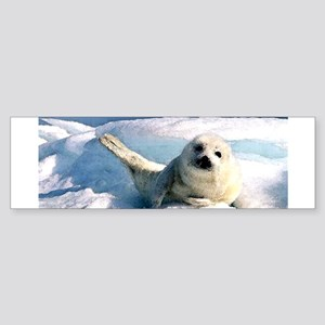 harp seal 2 Bumper Sticker