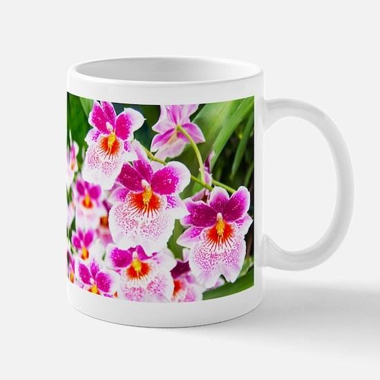 Cattleya White And Pink Orchids Mug