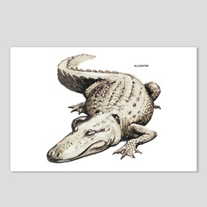 Alligator Gator Animal Postcards (Package of 8)