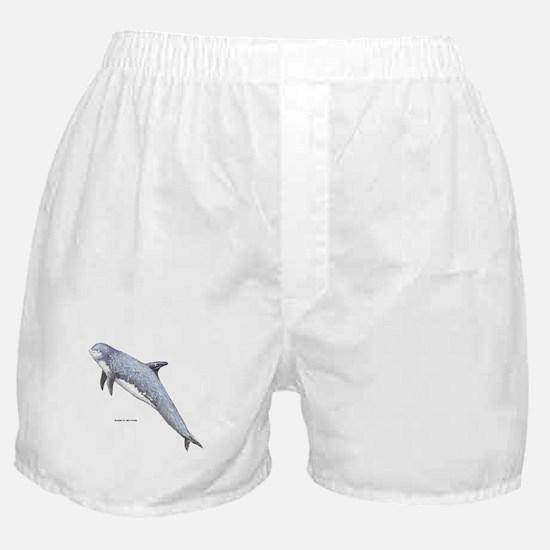 Rissos Dolphin Boxer Shorts