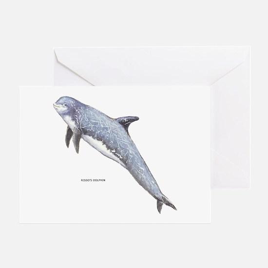 Rissos Dolphin Greeting Card