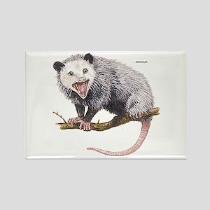Opossum Possum Animal Rectangle Magnet