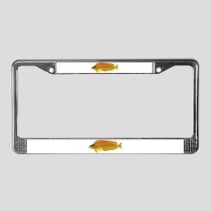 Kelp Greenling fish License Plate Frame