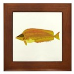 Kelp Greenling fish Framed Tile