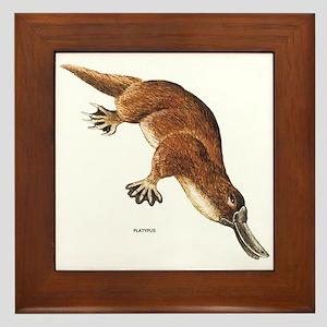 Platypus Animal Framed Tile