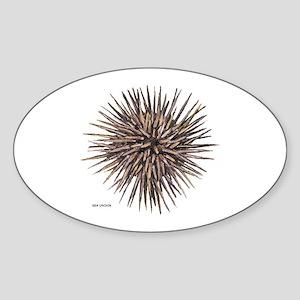 Sea Urchin Sticker (Oval)