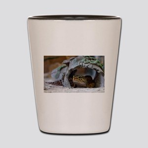 leopard geckos house Shot Glass