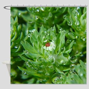 Ladybug In Dewdrop Shower Curtain