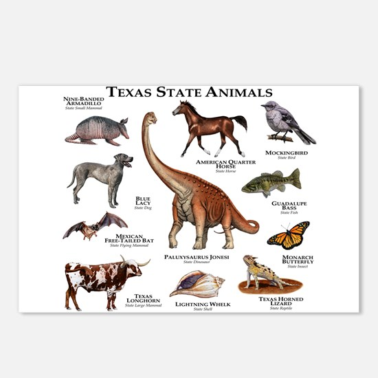 Texas State Animals Postcards (Package of 8)