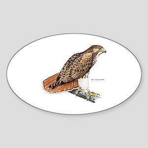 Red-Tailed Hawk Bird Sticker (Oval)