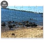 Puzzle - Black Swans NTE