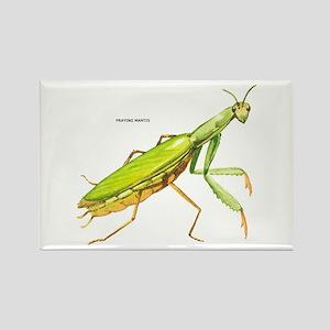 Praying Mantis Insect Rectangle Magnet